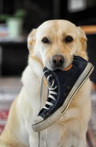 犬のボケ行動5選と