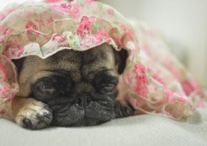 嘔吐の治療と対応