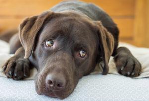 犬の嘔吐の原因と治療