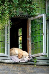 季節に合わせた愛犬のケア方法とは?