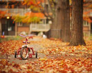 秋の愛犬ケア方法
