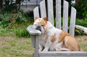 犬のアトピー性皮膚炎の治療とは?