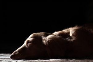 犬の応急処置とは?